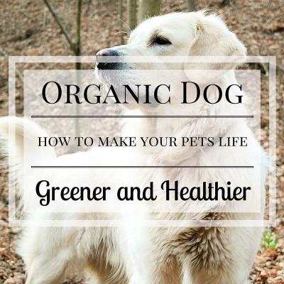 organic dog