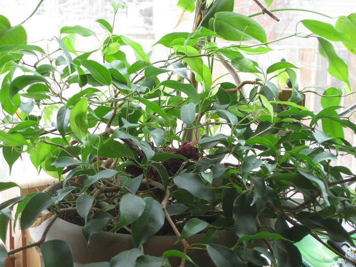 clean your air with houseplants