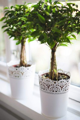 how to detox your home - indoor plants