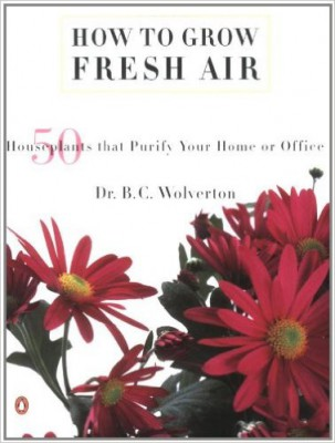 How to grow fresh air, benefits of house plants