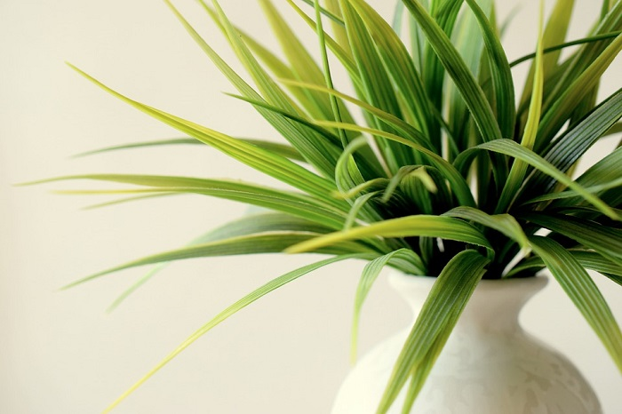 Benefits of indoor house plants
