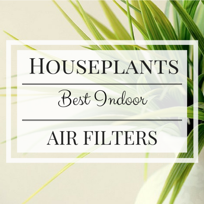 Houseplants : Best Indoor Air Filters
