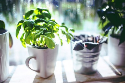Plants to get rid of bugs