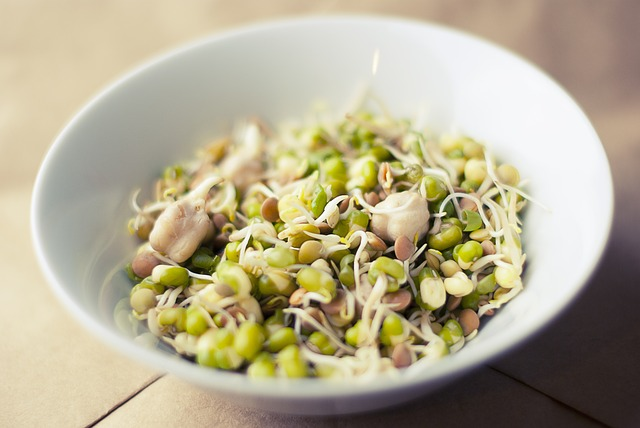 sprouting seeds at home for beginers