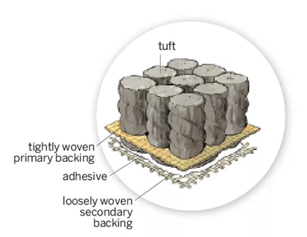 Illustration of the anatomy of a rug