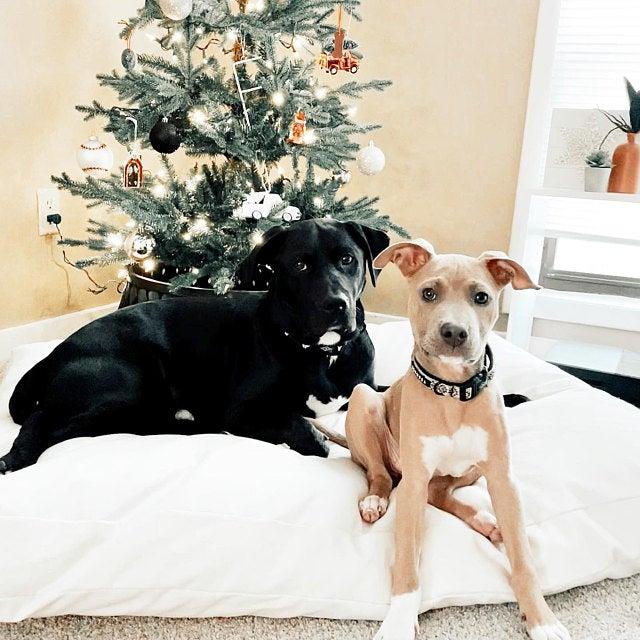 Best Eco-friendly pet beds - CeCe's Wool