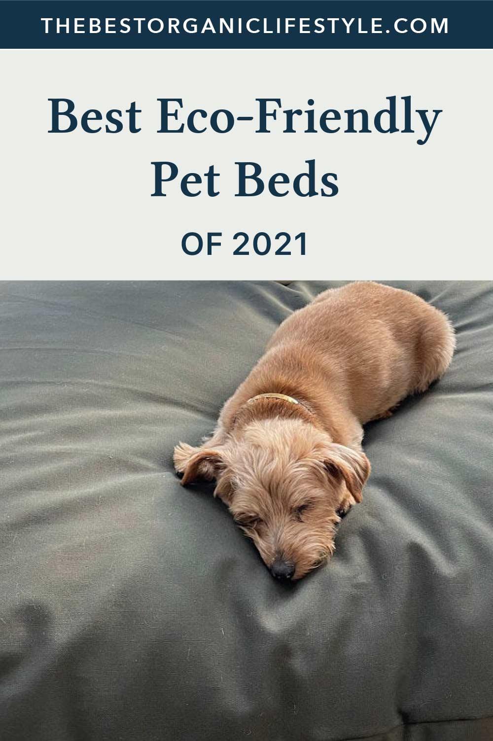 Best Eco-Friendly Pet Beds of 2021