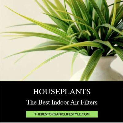 Houseplants: The Best Indoor Air Filters