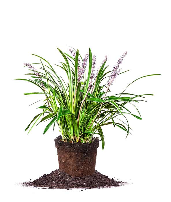 Houseplants : Best Indoor Air Filters